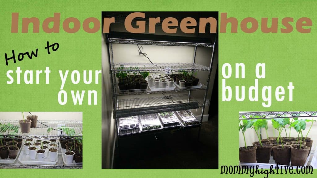 Indoor-Green-House-on-Budget