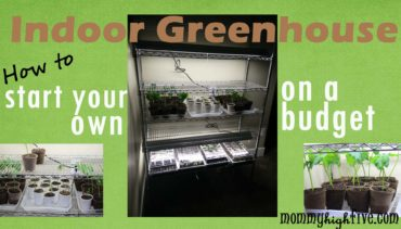 How to Build a Cheap Indoor Greenhouse on a Budget