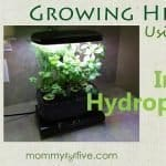 5 Best Budget Indoor Hydroponics Kits for Growing Your Home Herb Garden 2018