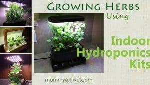 5 Best Budget Indoor Hydroponics Kits for Growing Your Home Herb Garden 2018