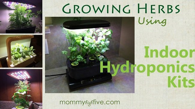 Growing-Herbs-Indoors-Hydroponics