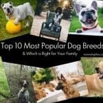 Which Popular Dog Breed Is Right for Your Family