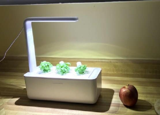 Indoor-Gardening-Kit-to-Buy