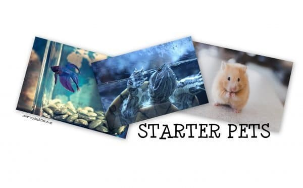 Good and Easy Small Starter Pets for Kids