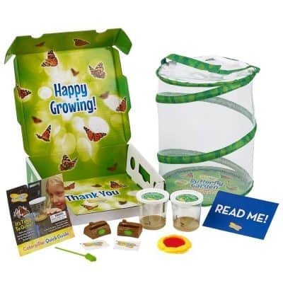 Insect Lore Deluxe Butterfly Garden