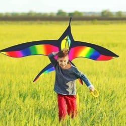 Stoie's Bird Kite