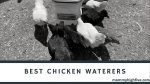 9 Best Automatic Chicken Waterers