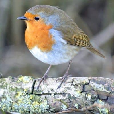 Virtual scavenger hunt bird watching